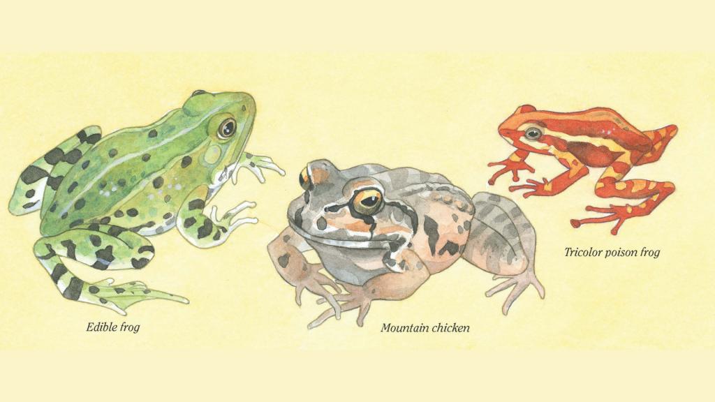 Frogs! Strange and Wonderful